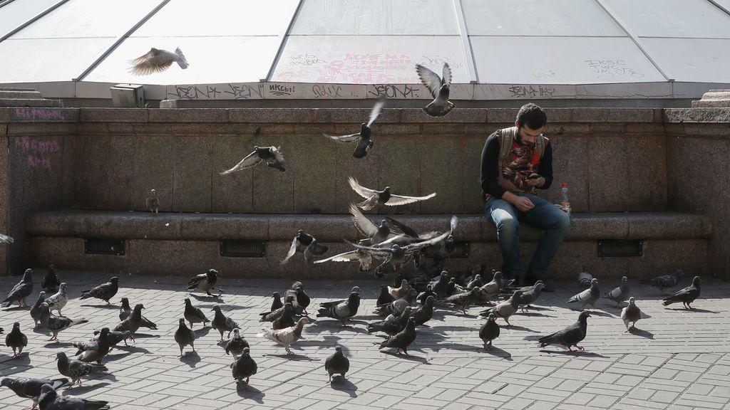 Mendigos cazan catorce palomas en Reino Unido para comérselas