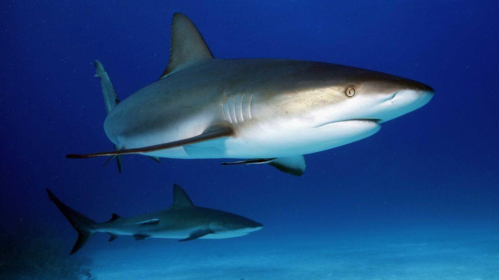 Descubren que guardaba 10 tiburones en un sótano de una casa de Nueva York