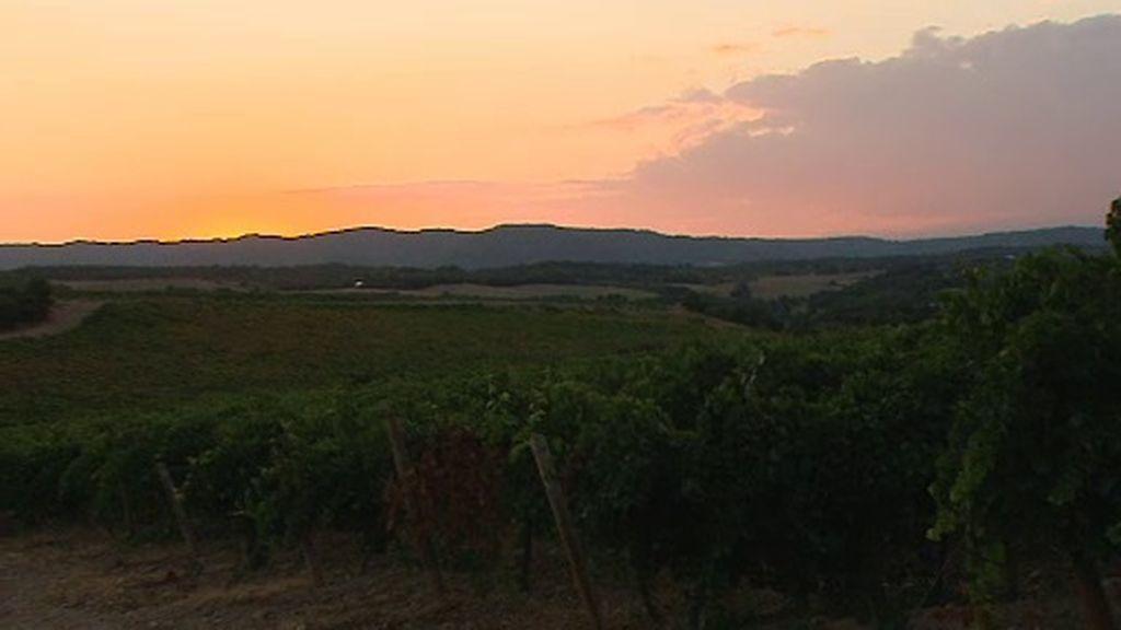 De la uva a la botella: cosechamos un vino 'made in Crónica Cuatro'