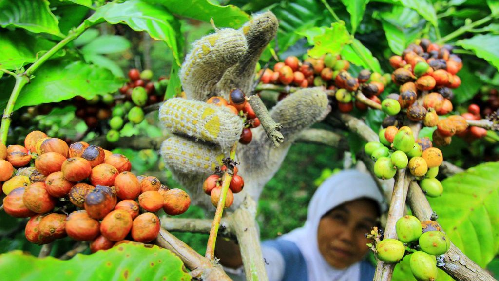El calentamiento global amenaza al café y las abejas pueden salvarlo