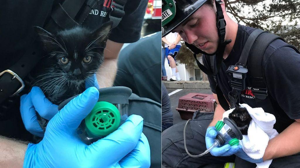 La tierna imagen de un bombero que rescata a una cría de gato