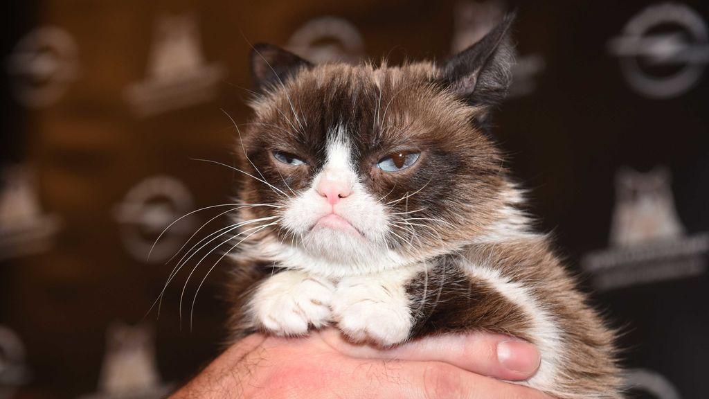 No puede tener erecciones tras contraer una enfermedad rara por unos arañazos de un gato