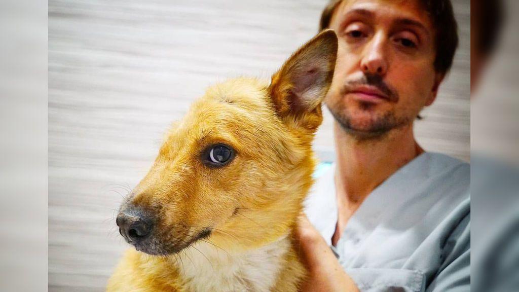 Sky, el perro al que le partieron la cara de un palazo, vuelve con su nueva familia adoptiva