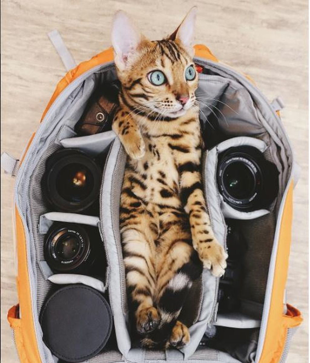 Suki, el gato aventurero que se ha recorrido Canadá