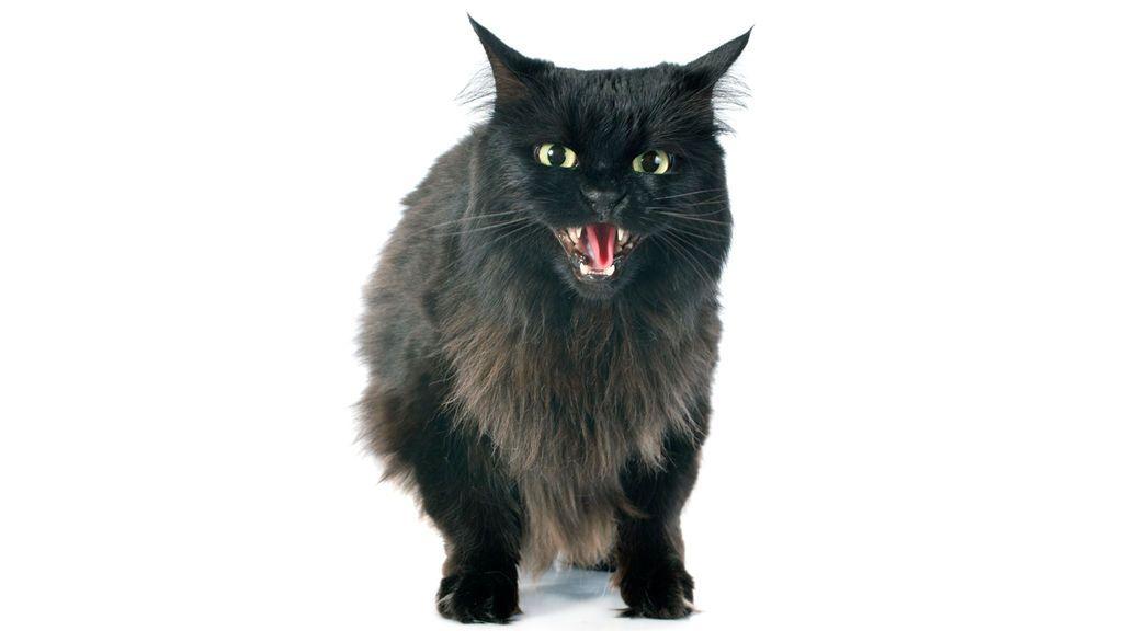 Explicación al misterio de los gatos con mal carácter