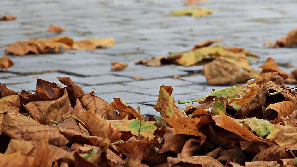 autumn-1685924_1920