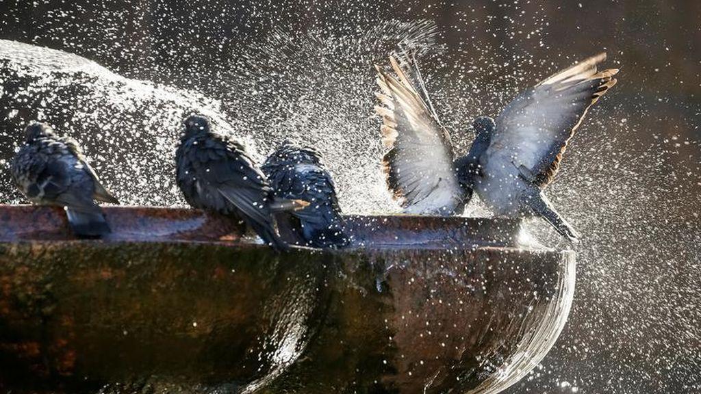 Unas palomas se bañan en una fuente del centro de Kiev, Ucrania