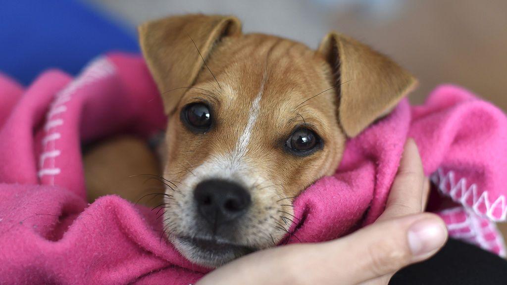 Razones por las que ahora es el momento perfecto para adoptar un perro