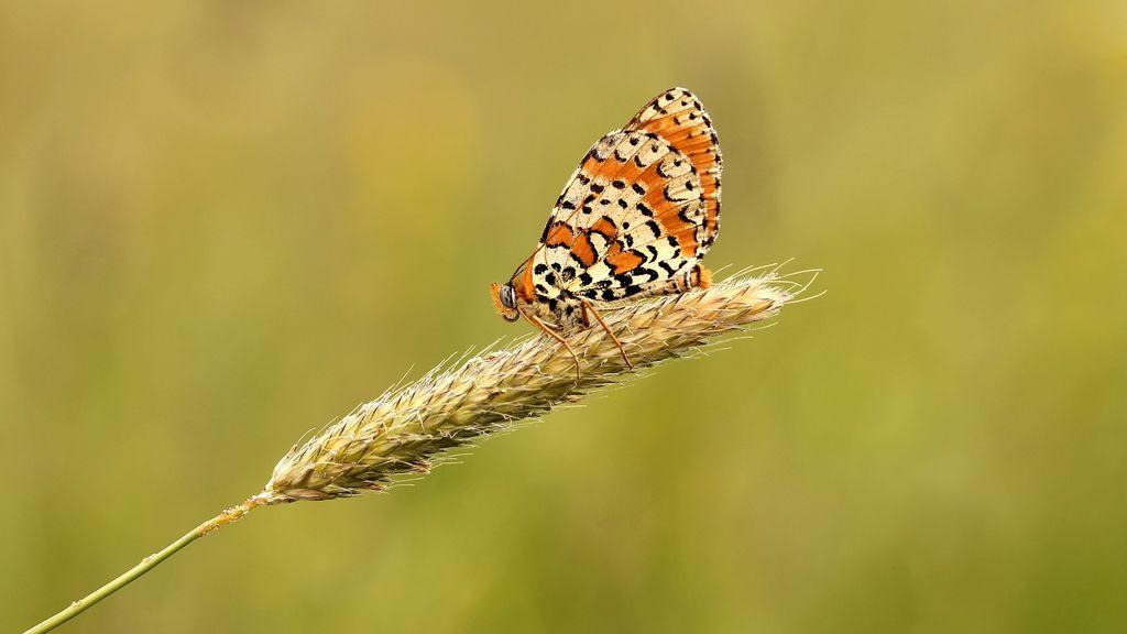 butterfly-1757511_1920