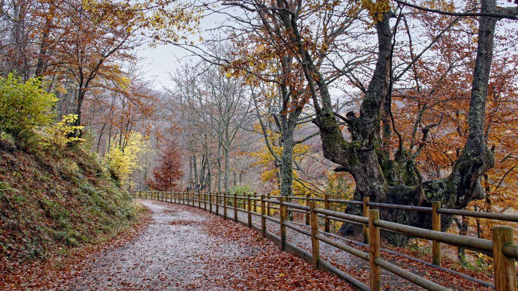 ¿Qué otoño nos espera: frío y lluvioso o cálido y seco?