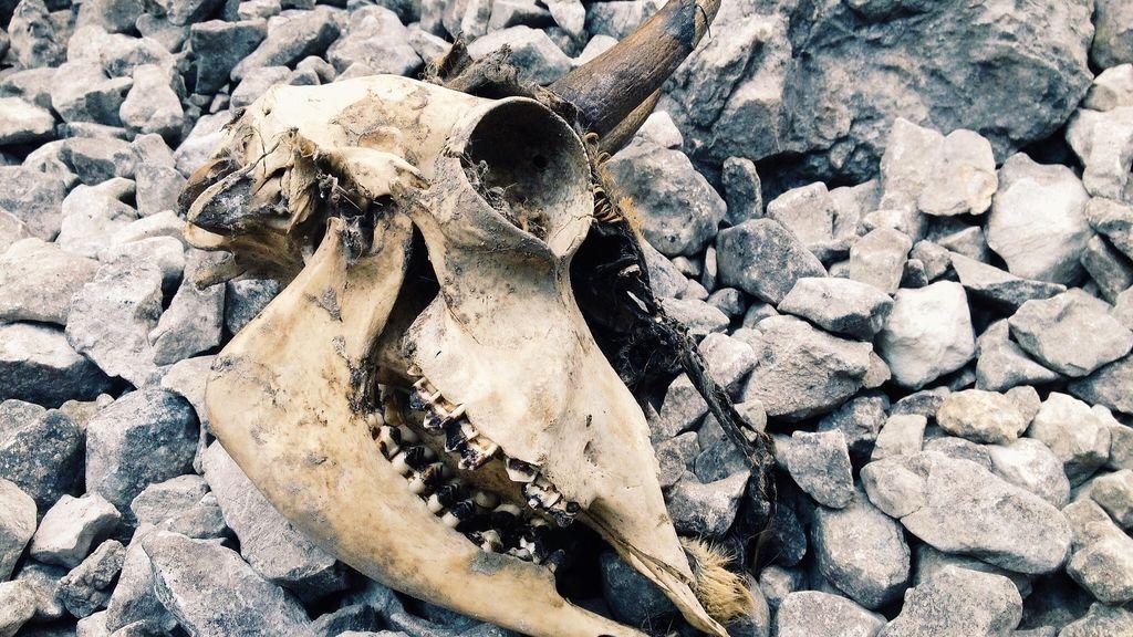 skull-1209952_1920