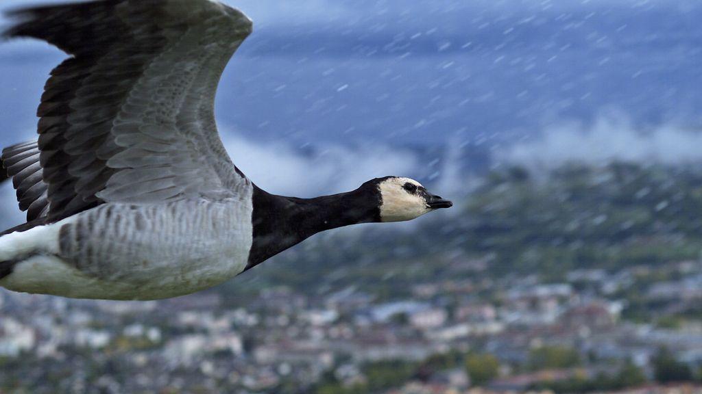 El Planeta, a vista de pájaro