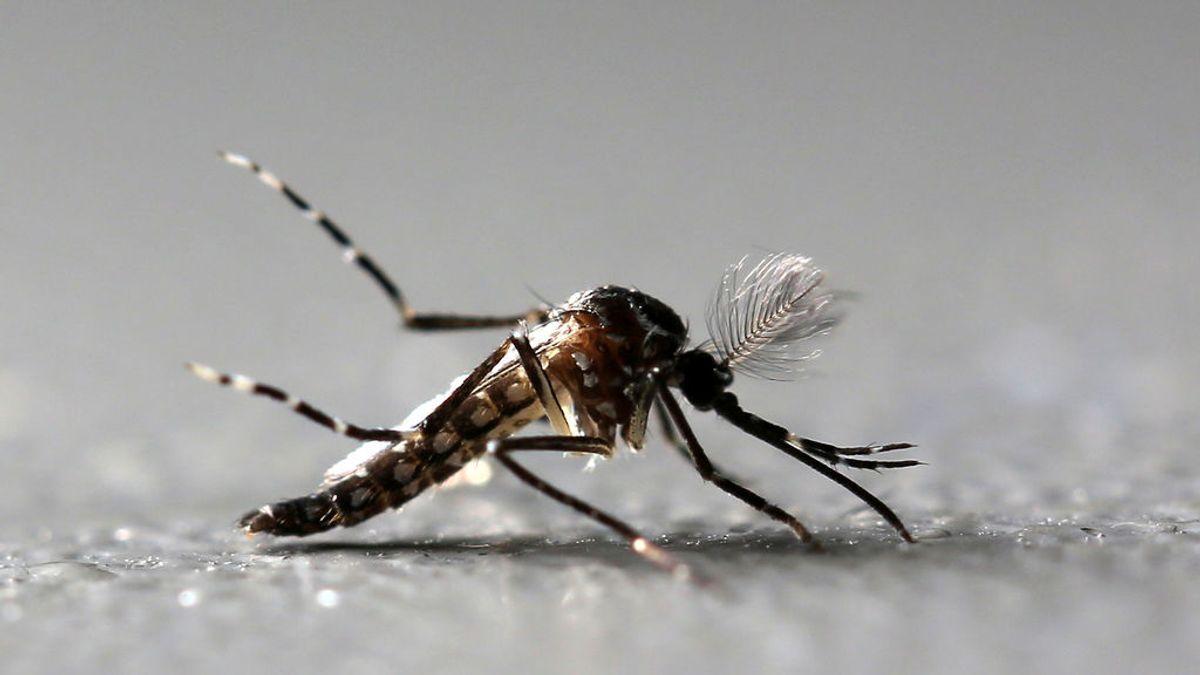 La fiebre del Valle del Rift: el nuevo 'Zika' que amenaza a Europa debido al calentamiento global