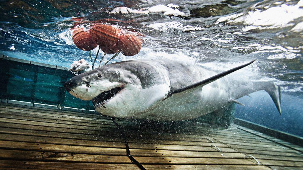 'Hombres tiburón'