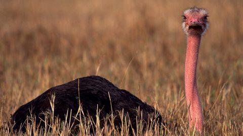 Los 20 Animales Más Fascinantes De áfrica