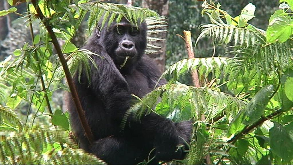 'Callejeros viajeros: Los últimos gorilas' (Cuatro). El 1 de enero, a las 22.45