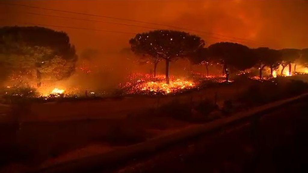 Más de 2.000 hectáreas calcinadas en tan solo 8 horas por el incendio de Gran Canaria
