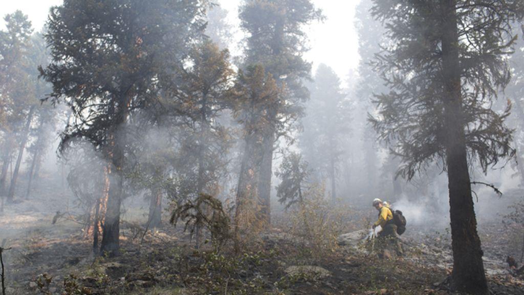 'El fin de los bosques', el 5 de febrero a las 23.00