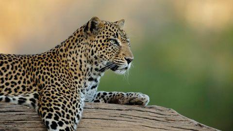 Los 20 Animales Mas Fascinantes De Africa