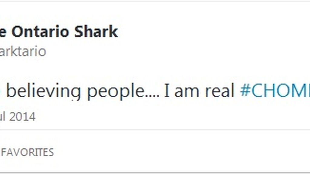 Twitter tiburón toro