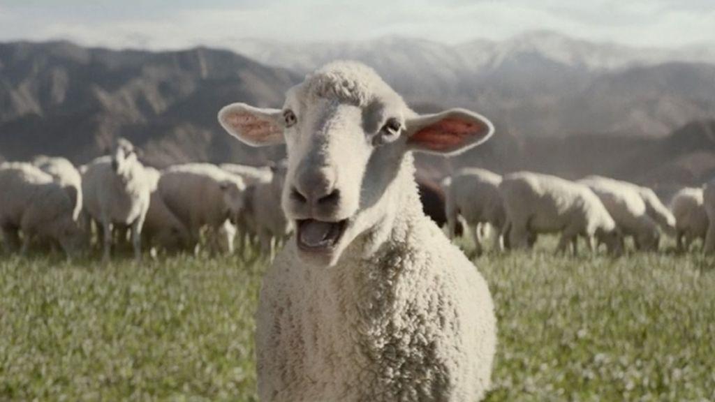 Las ovejas cantan a Queen en la Super Bowl 2016