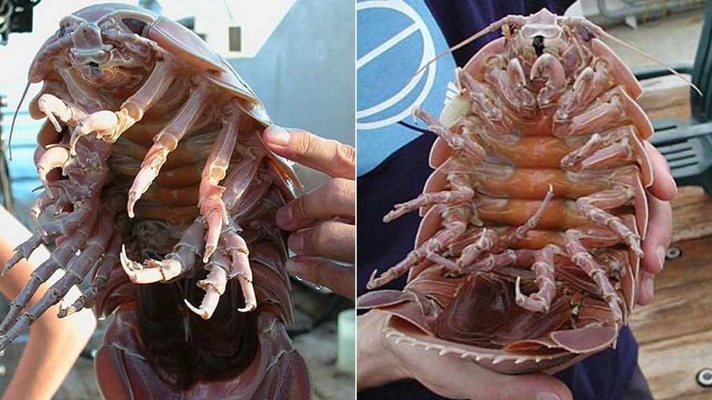 Los ocho monstruos marinos más raros del mundo