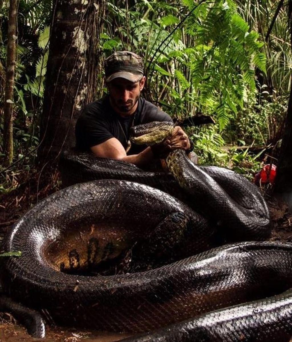 Paul Rosolie es engullido por una anaconda