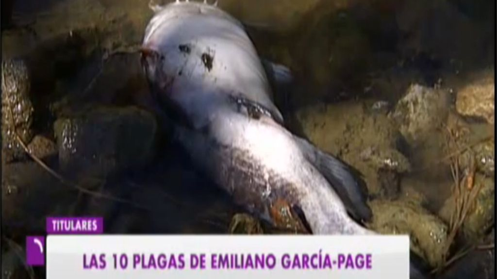 Peces muertos RTVCLM
