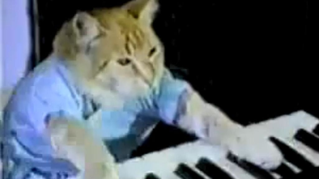 Gato tocando piano