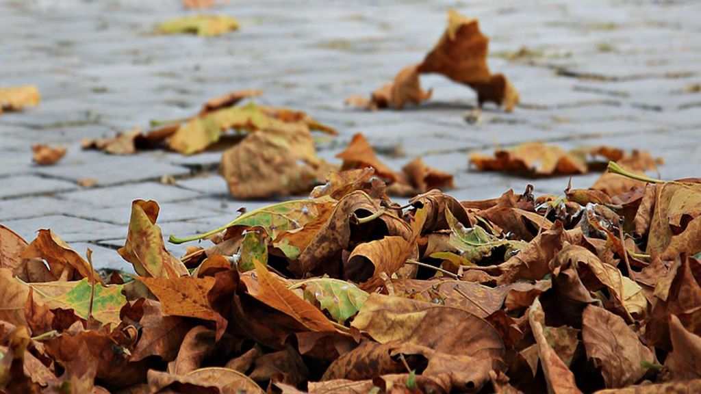 El experto habla: tres cosas que hacen que en otoño se te caiga más el pelo