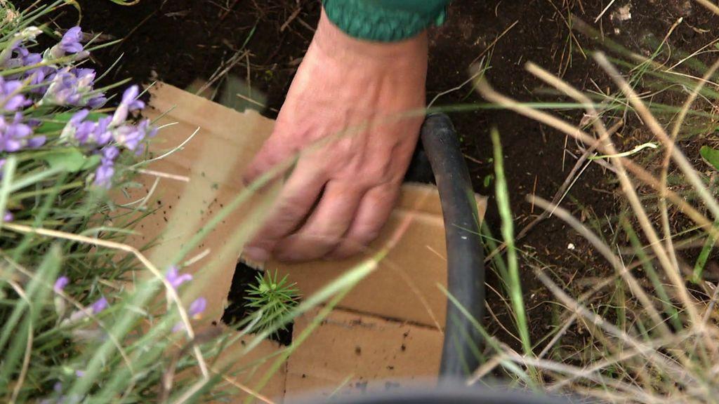 ¡Misión cumplida! La repoblación de los pinsapos en la Sierra de Grazalema ya es una realidad