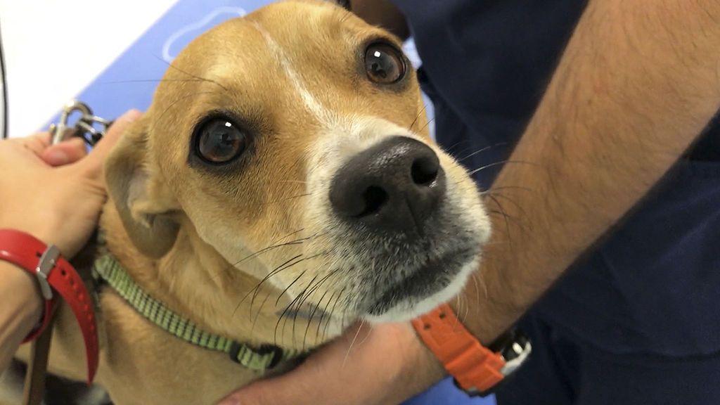 ¿Qué debemos tener en cuenta después de vacunar a nuestra mascota?
