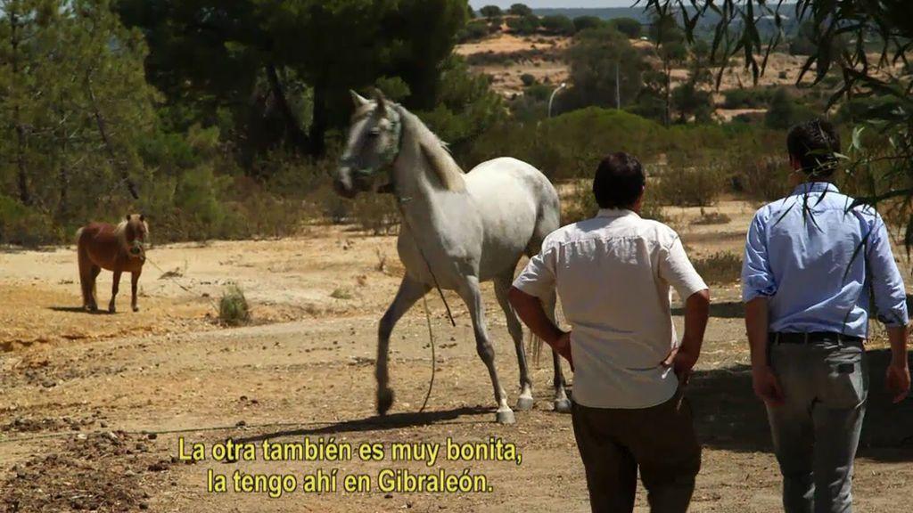 Ocupa de lujo: vive en un chalet al lado de la playa, tiene dos yeguas y un pony