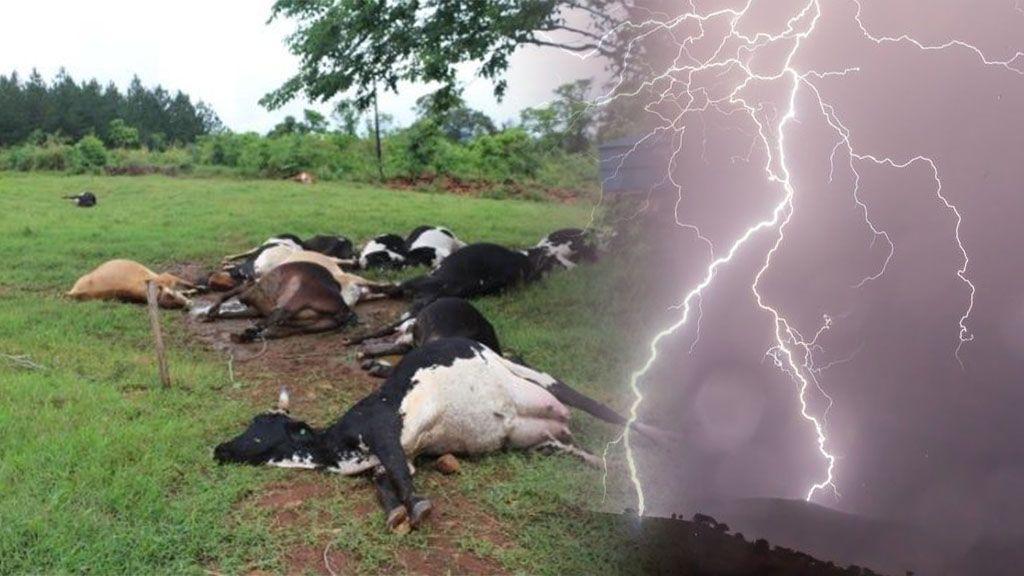 Desastre meteo: 18 vacas han muerto por culpa de un rayo