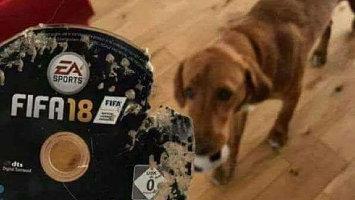 ¡Tragedia gamer! Se compra el FIFA 18 y su perro se lo destroza horas después