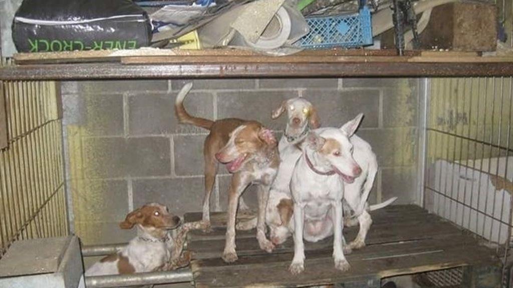 Rescatados una docena de perros que se encontraban hacinados en una nave