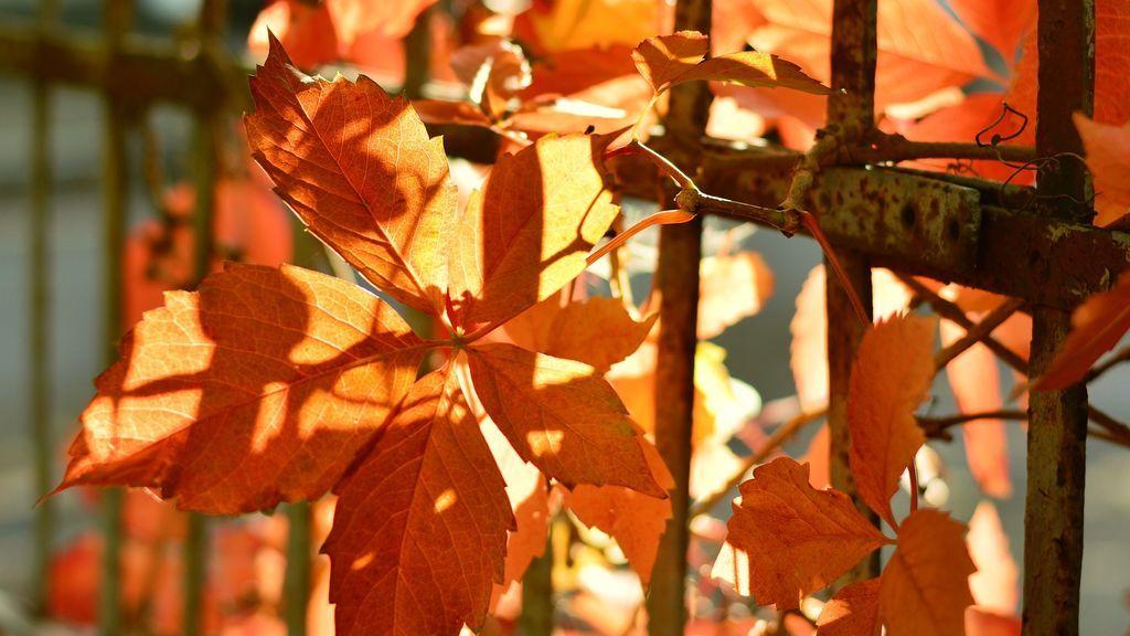 ¿Qué está causando este calor de octubre?