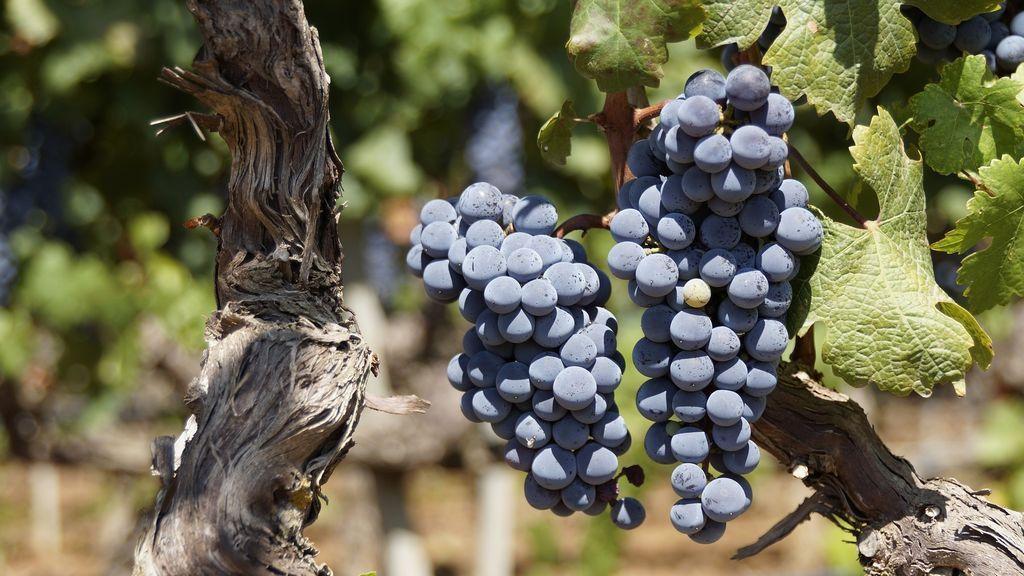 grape-2783147_1920