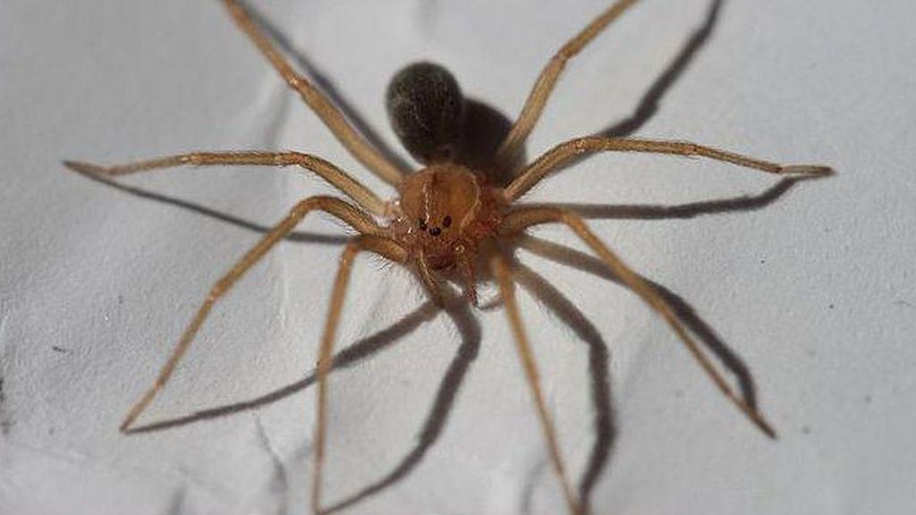 Muere un bebé por la mordedura de una araña