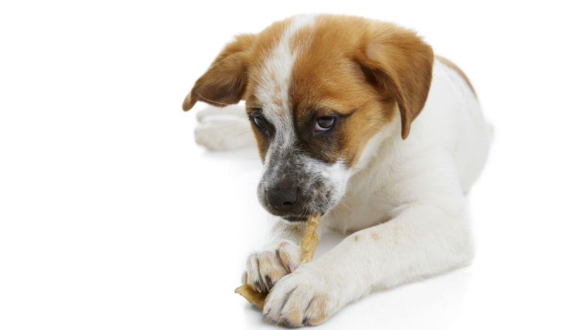 Los 7 alimentos que tu perro no puede comer