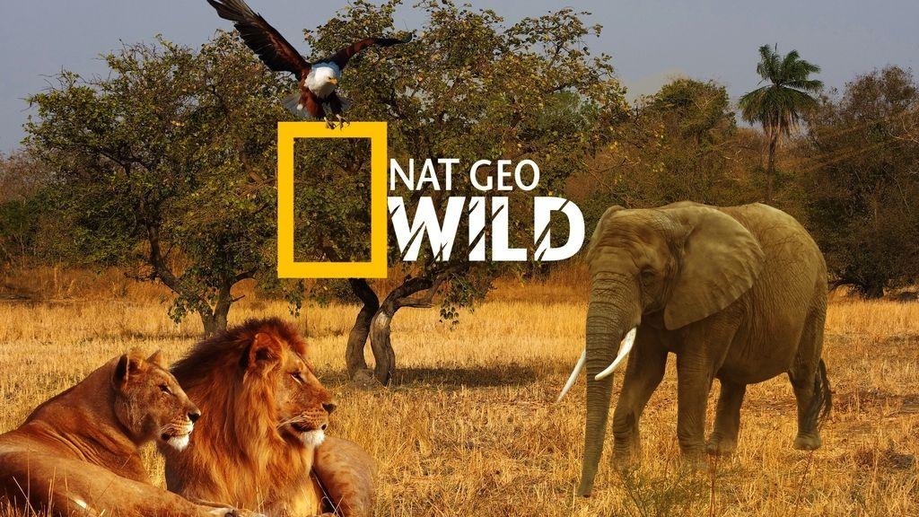 2010 Lanzamiento canal Nat Geo wild