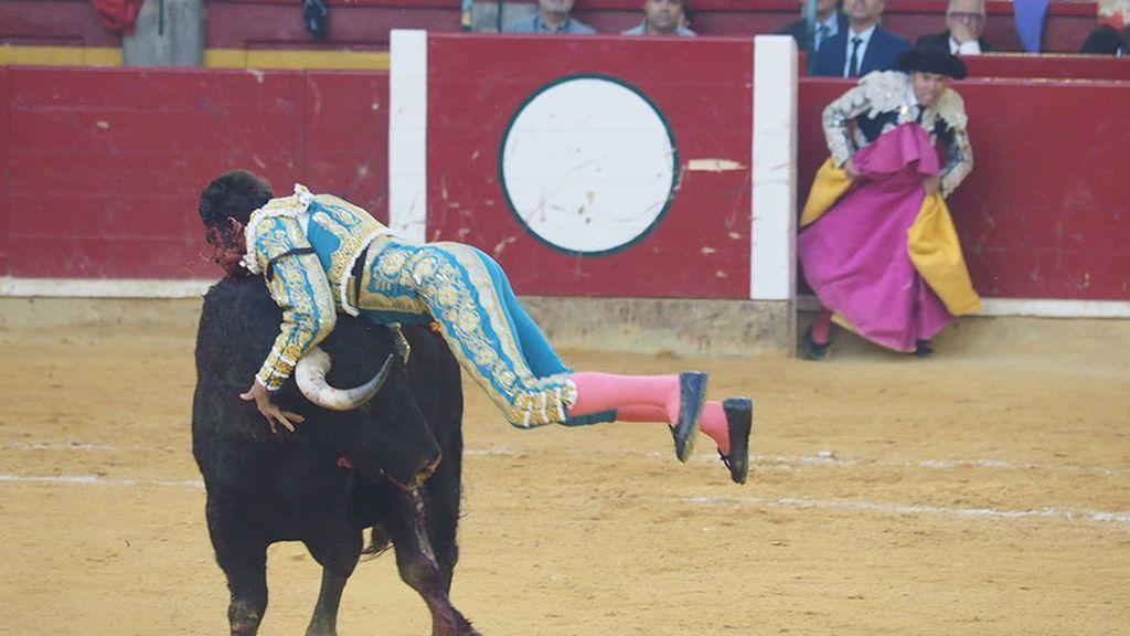 Así ha sido la grave cogida a Cayetano Rivera en las Fiestas del Pilar
