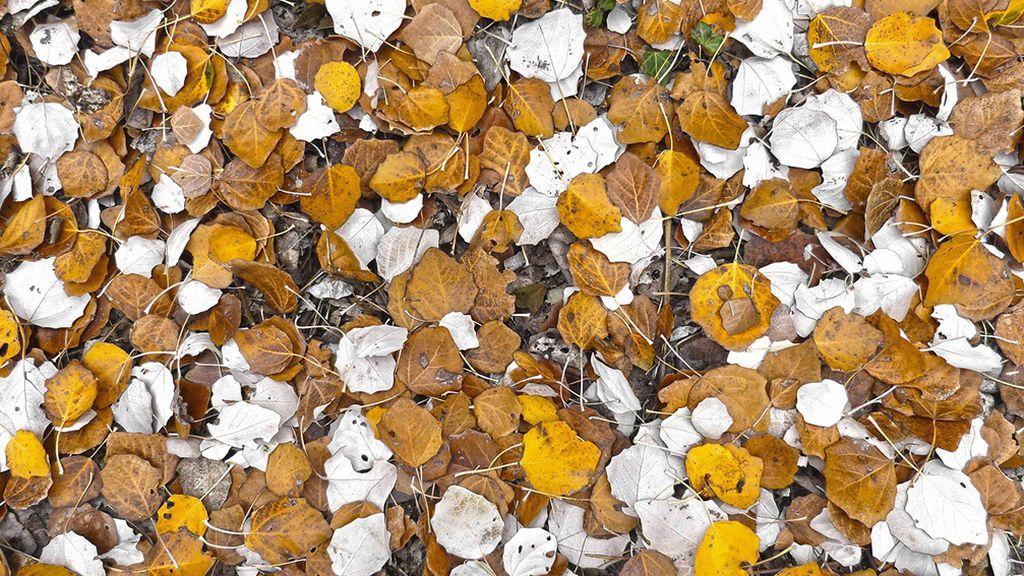 Petricor y otros nombres raros que vas a tener que aprender este otoño