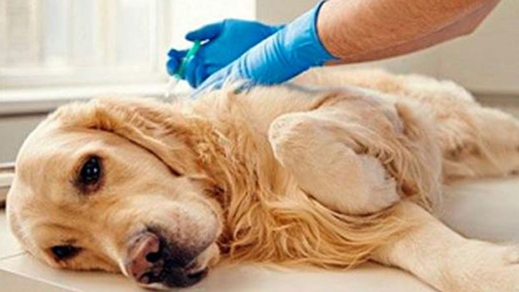Le dan dos días de permiso retribuido para atender a su perro enfermo