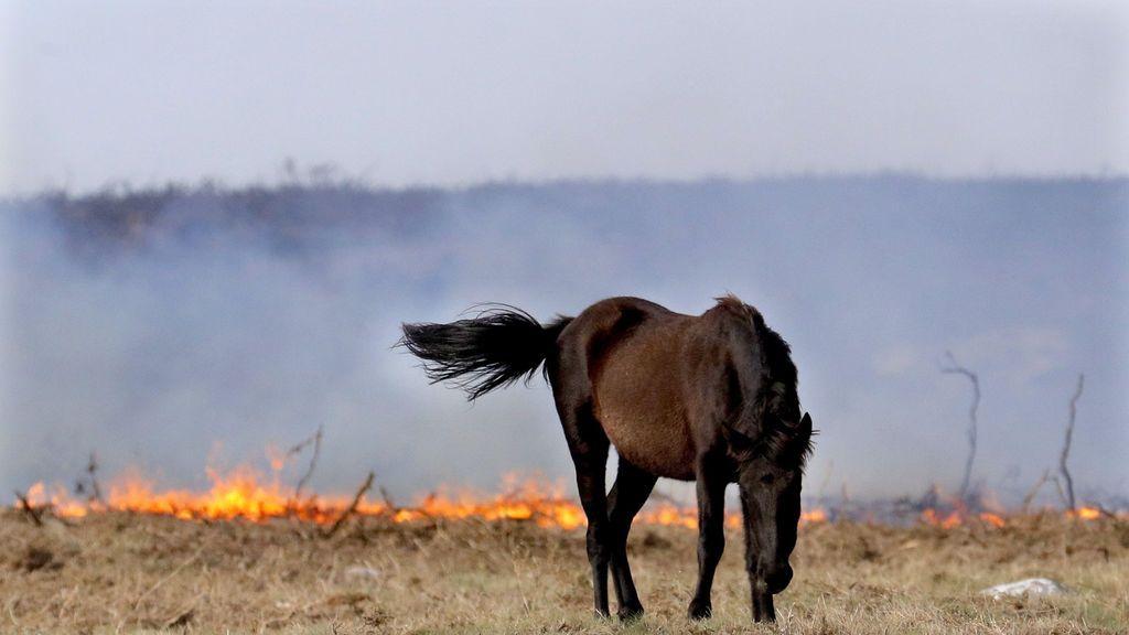 Los 80 incendios que azotan Galicia, en imágenes