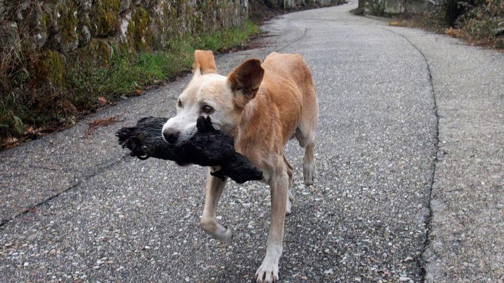 La sobrecogedora imagen de una perra con el cadáver de su cría calcinado