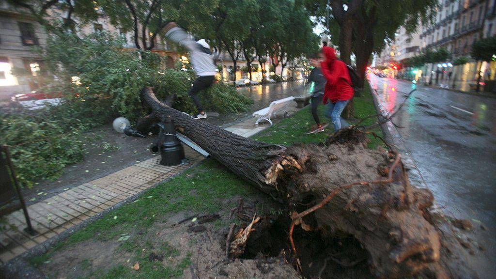 El viento en Tarragona deja balcones desprendidos y árboles por los suelos