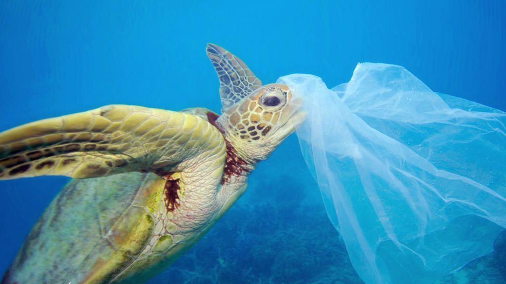 ¿Un problema sin solución? Xavier tiene la clave para evitar el impacto del plástico en el mar