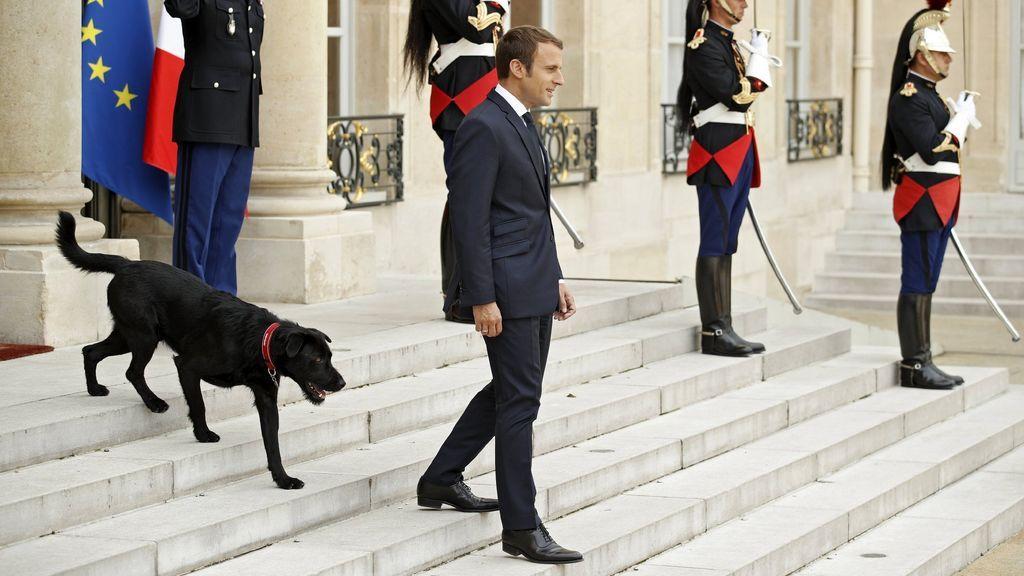 El acto políticamente incorrecto del perro de Macron en el Elíseo