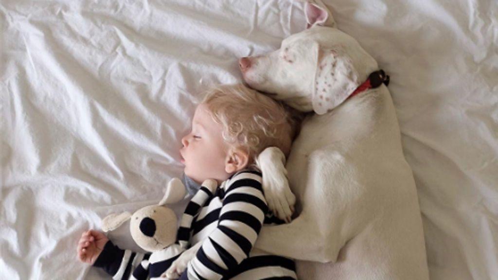 Un perro maltratado se asusta de todo excepto de este bebé